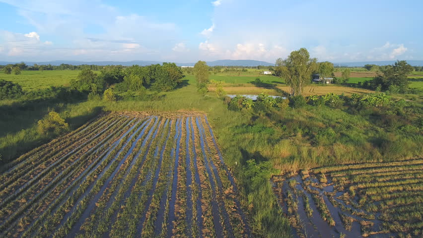 Top view Rice fields after harvest in Phitsanulok province, Thailand