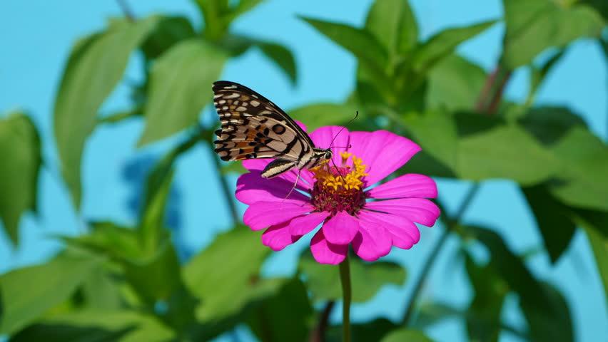 Butterfly on flower in the garden  #32032759
