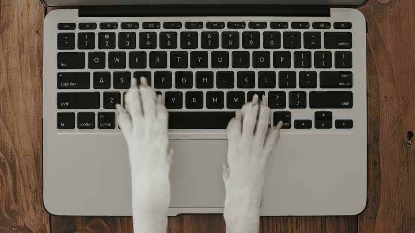 Funny and silly playful video of dog paws typing and pressing buttons on laptop keyboard nervously and rapidly. concept joke or freelance work in office, pet life and routine workplace #32044789