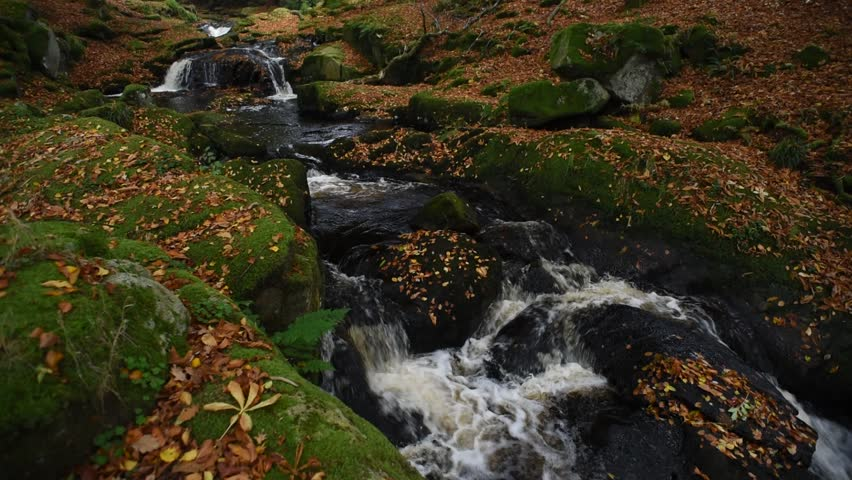 Autumn river in the forest in Wicklow Mountains - Ireland/ Autumn river/ Autumn river cascade in Ireland | Shutterstock HD Video #32045539