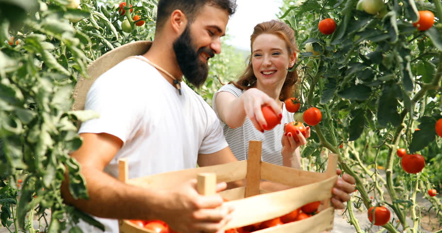 Young couple of farmers working in greenhouse   Shutterstock HD Video #32099389