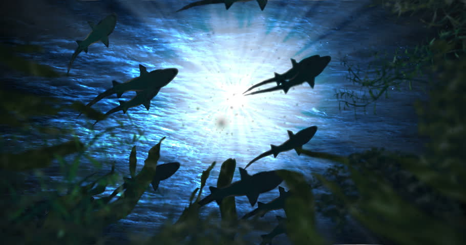 Animation featuring a school of sharks swimming in the ocean, looking up at the water surface from among the plants below.