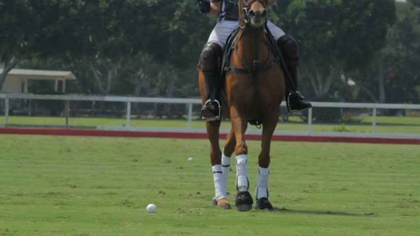 Header of Polo