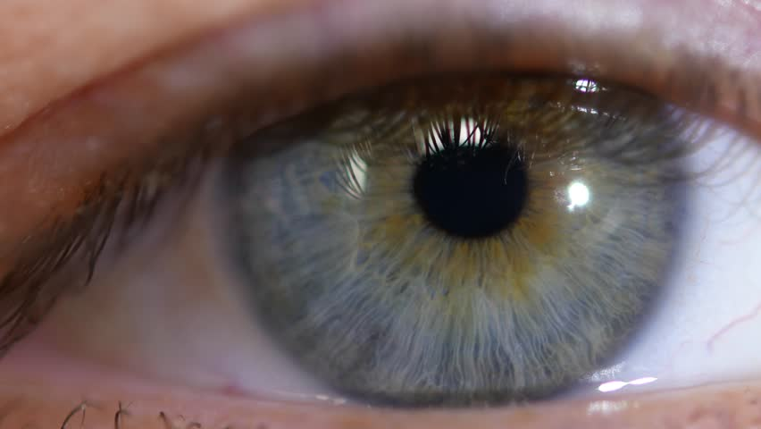 Male eye macro video. The pupil close-up moves in the eye. | Shutterstock HD Video #32363629