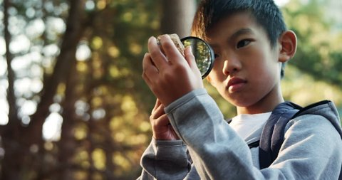 Kid examining a rock in the forest on a field trip4k