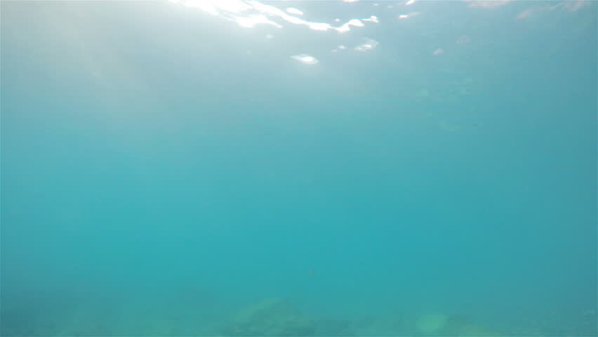 Submerged in the sea with fishes swimming and light reflections sun on the surface | Shutterstock HD Video #32508145