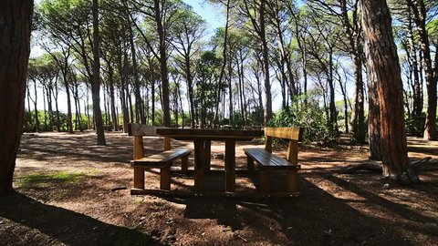 Wooden table in a pine wood in Sardinia, Italy