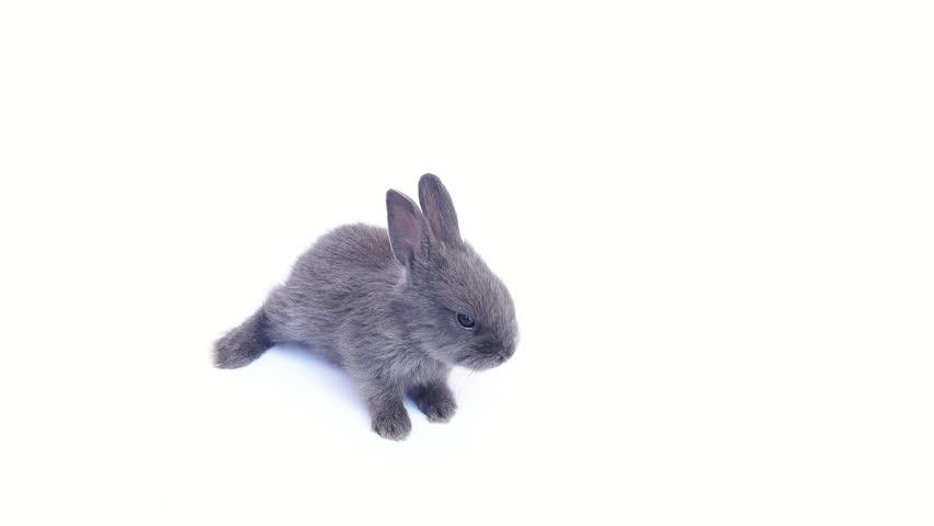 Lovely 20 days rabbit over white background | Shutterstock HD Video #32766979