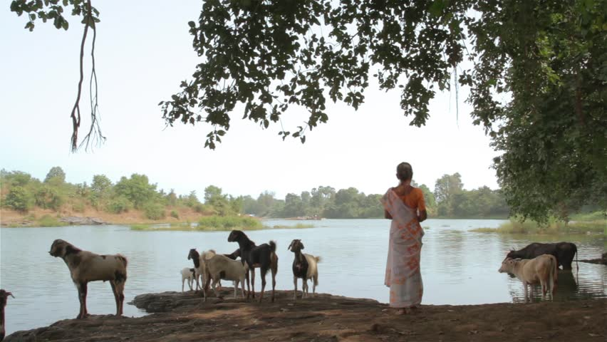 An Indian lady in Saree standing under a banyan tree herding goats, next to a beautiful river