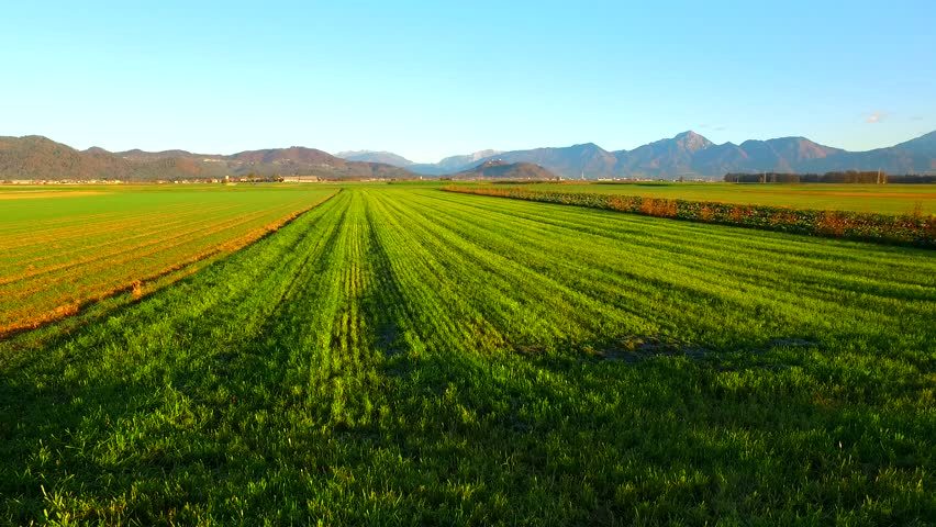 Green fields with young, green, gentle plants of barley. Autumn time. Winter barley. Mountains in the back. | Shutterstock HD Video #32818549