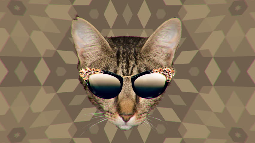 Minimal Motion collage art. Cat and trend sunglasses. Fashion Accessories Concept  | Shutterstock HD Video #32923681