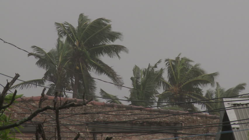 Hurricane Winds Thrash Palm Trees - Full HD 1920x1080 30p shot on Sony EX1.