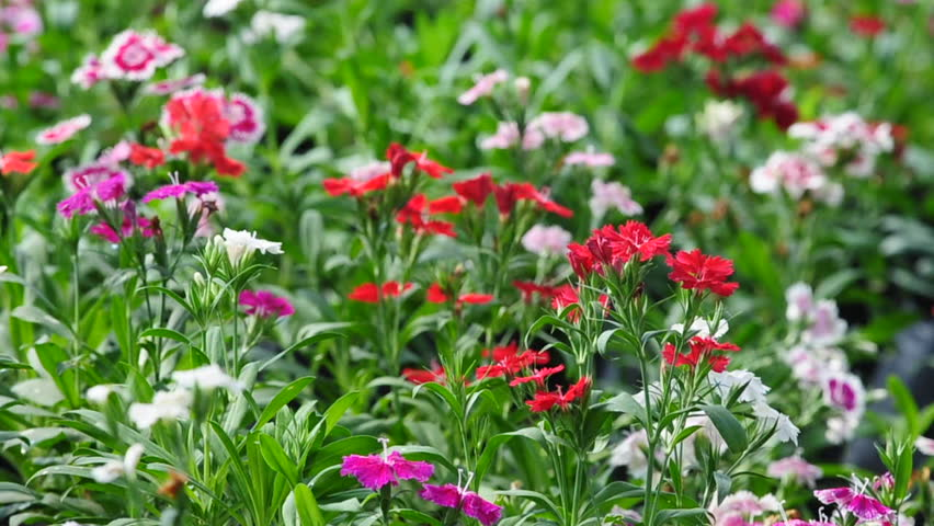 Flower Garden Background With The Stock Footage Video 100 Royalty Free 3298109 Shutterstock