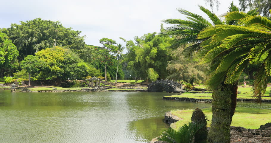 Botanical Garden Tropical Plants Pond Hilo Hawaii. Trees, Plants And Pond  In Urban City