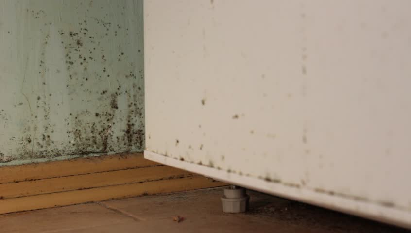 Mold In House Black On Walls