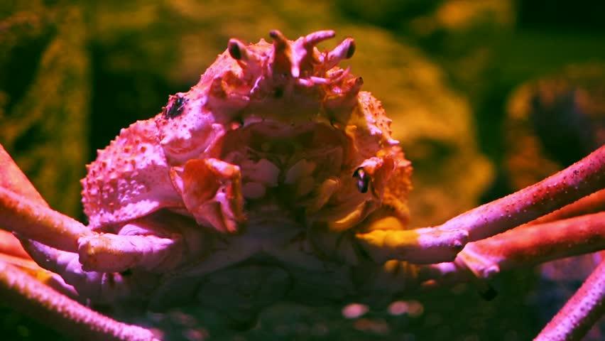 Header of Alaska Crab