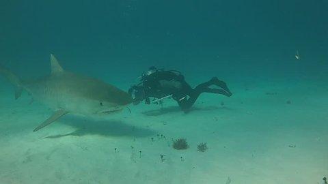 Tiger Shark Bites Camera in Bahamas