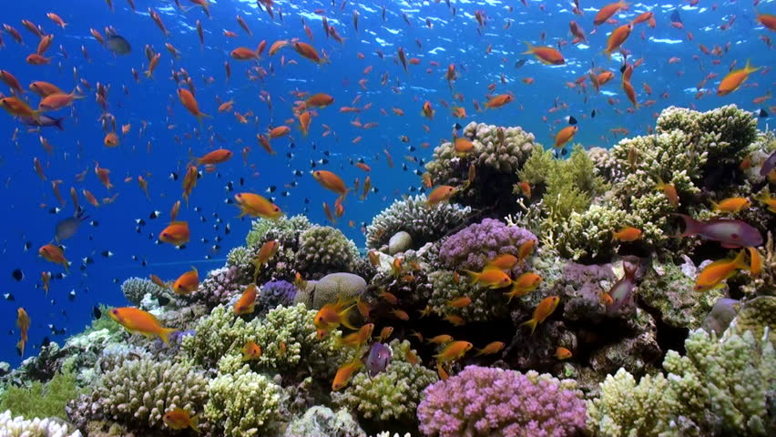 Ocean Scenery Underwater In Australia Stock Footage Video ...