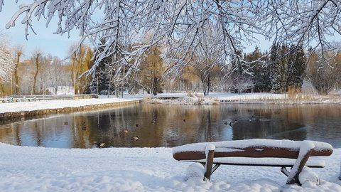 First snow in the city park with ducks on an icy pond and a bench covered with snow