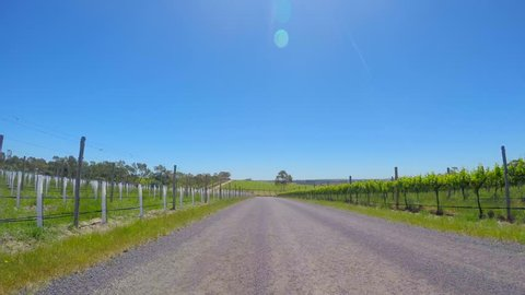 Vehicle POV, driving along bumpy dirt road past rows of young grape vines, in McLaren Vale, South Australia.