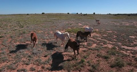 Wild Horses beautiful video filmed in the desert of Utah and arizona, smooth drone aerial video filmed in 4k at 100mbps