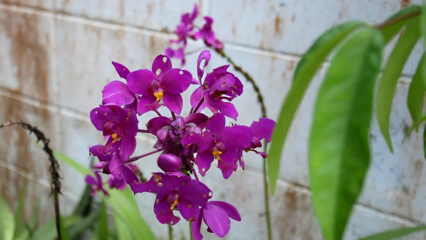 Header of orchid