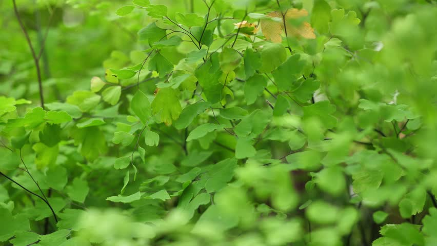 Green bush close up. Abstract nature background. Green leafs | Shutterstock HD Video #33968959