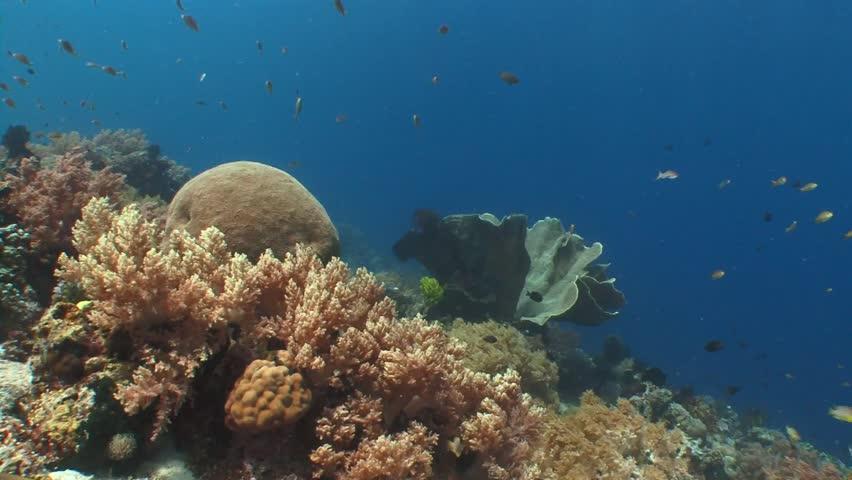 Underwater Plants Stock Footage Video | Shutterstock