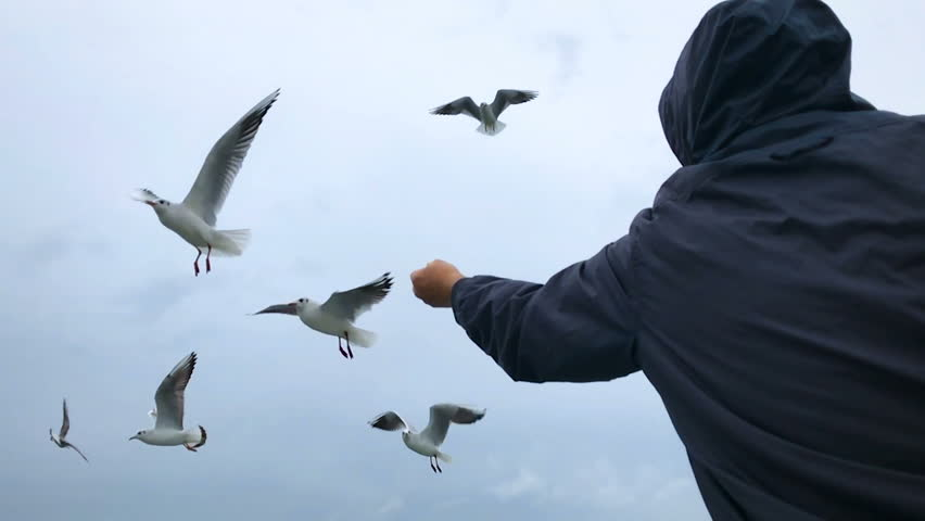 People on the ferry are fed bread with gulls hovering in the air against the cloudy sky. Slow motion. | Shutterstock HD Video #34316779