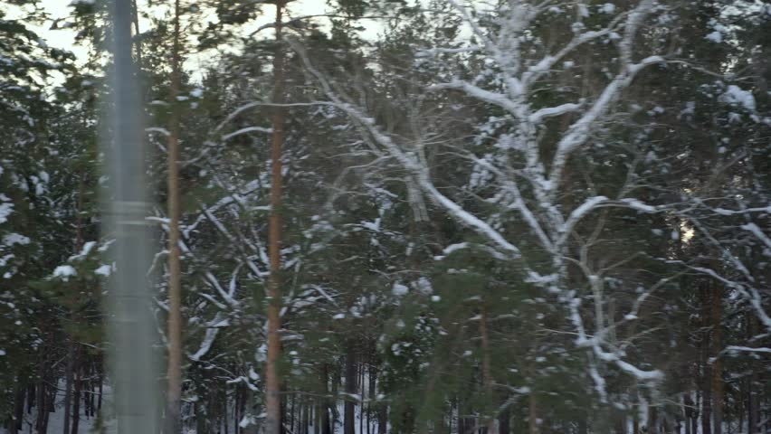 Video shooting of winter forest from the window of a moving car or train. The camera moves past trees, shrubs covered with snow, snow drifts. Pillars flicker in front of the camera. Sometimes the even