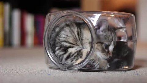 Kitten Playing Inside Fishbowl 1