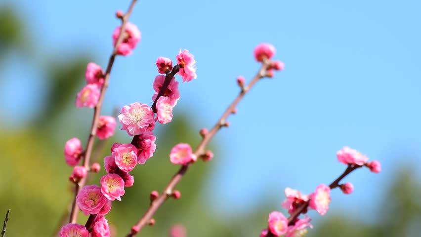 Plum blossom bae doona nude scene movie good result