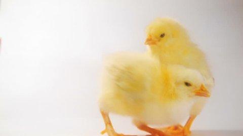 Crazy chicken dance :)