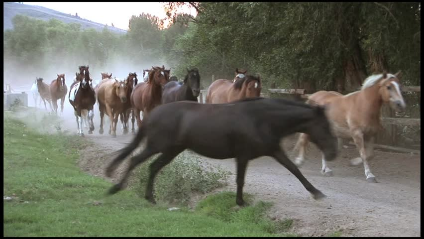 Cowboy Herding Horses down a Dusty Road | Shutterstock HD Video #3466682