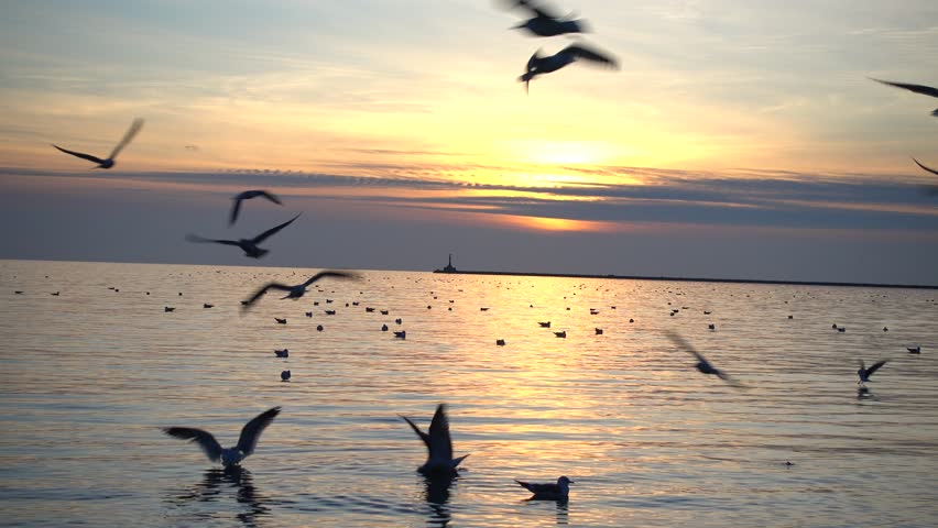 Seagulls and the sea in time a sunset. | Shutterstock HD Video #34800469