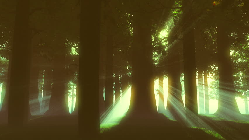Supernatural Forest Lightrays
