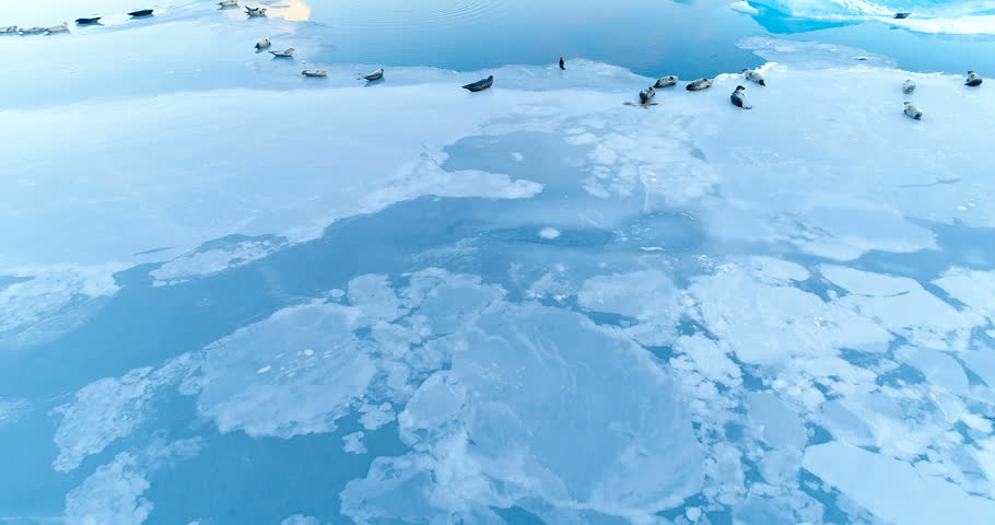 Seals on the ice floe in aerial view | Shutterstock HD Video #34886299