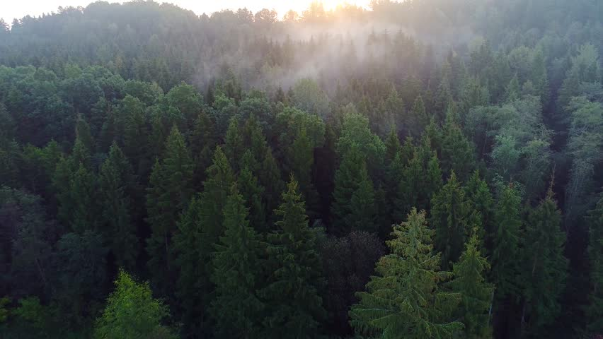 Flying above green forest at summer time | Shutterstock HD Video #34889089