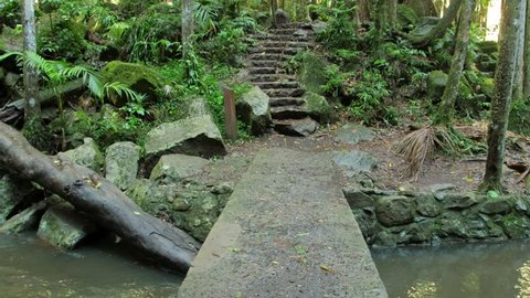 Streams and creek crossing along the Curtis Falls Trail on the Gold Coast Hinterland.