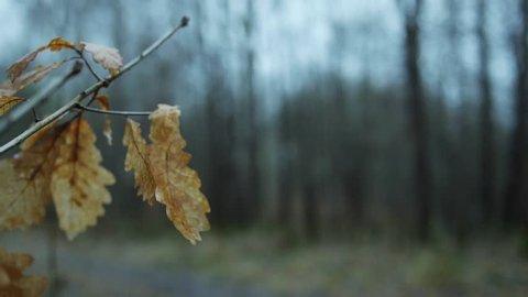 Leaf bookeh effect