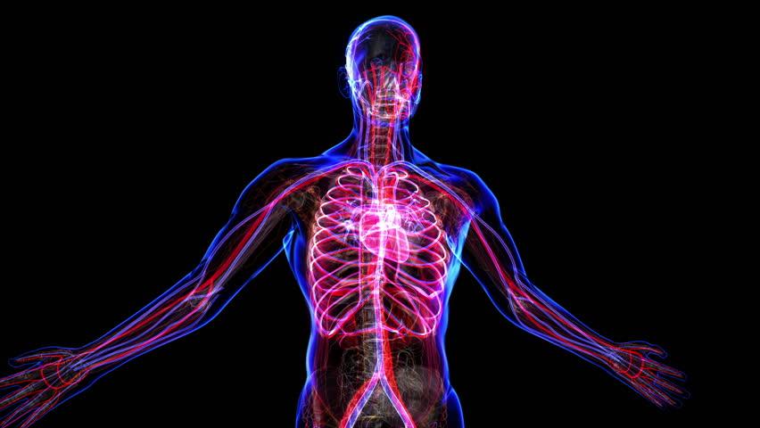 Animated anatomy videos