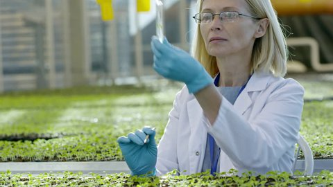 Tilt up of mature female agronomist in glasses wearing lab coat and gloves taking soil sample and putting it into test tube while inspecting seedlings in greenhouse