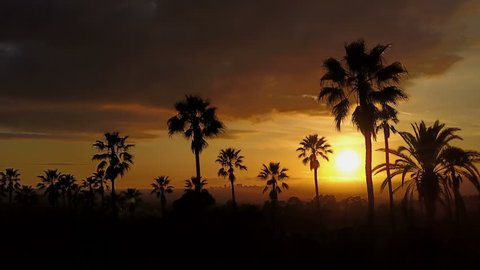 Silhouette of palm trees and a beautiful sunset.