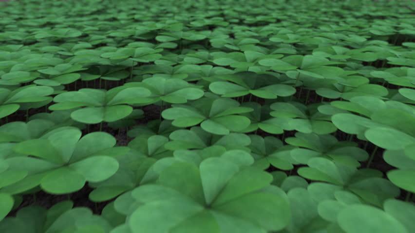 Bildergebnis für four leaf clover vs shamrock