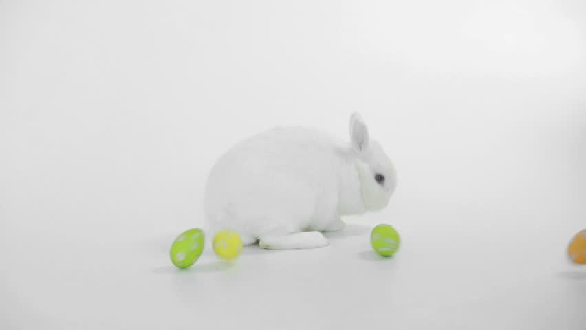 White rabbit with easter eggs rolling around on white background