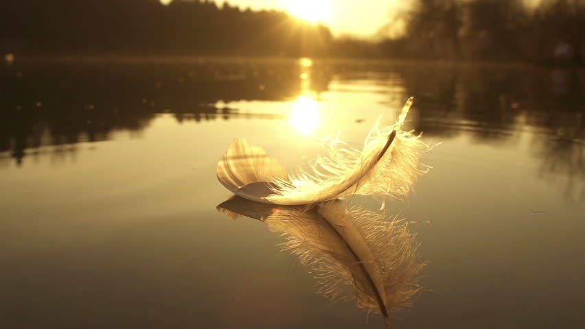 SLOW MOTION: Feather falls into the lake water at beautiful golden sunset in sunny summer