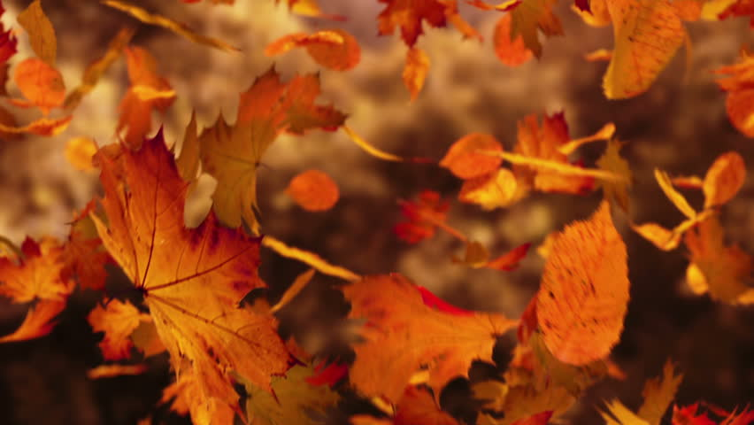 Close up on falling autumn leaves | Shutterstock Video #3633509