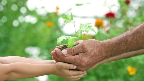 Senior man and child holding maple tree plant in hands against spring green background. Ecology concept. Slow motion