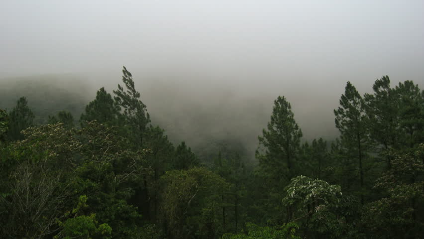Rainforest Mist Costa Rica 2 Timelapse. Time-Lapse of foggy mist passing through a rainforest in the Arenal Volcano area of Costa Rica.