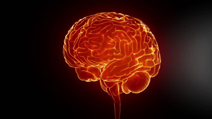 Stock Video Of Man Brain Anatomy In Xray 3705479 Shutterstock